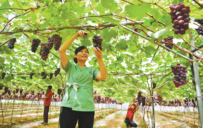 农旅融合促就业