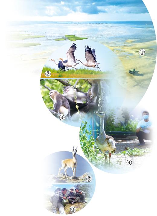 织密野生动物保护网(绿色家园)