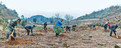 冬季忙造林 治理石漠化