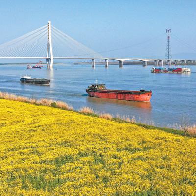 长江岸边好春光