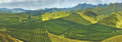 """""""十三五""""期间,我国完成造林5.45亿亩——人工林,为大地添绿"""