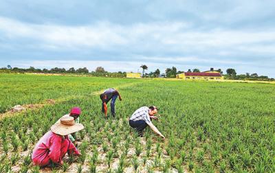 中坦农业技能相助结硕果
