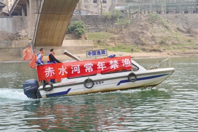 记者调查赤水河禁渔三年:消失的土著鱼类再现