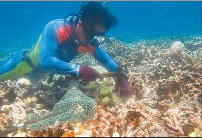 把试验平台搬到海面上,让珊瑚完全拥抱自然