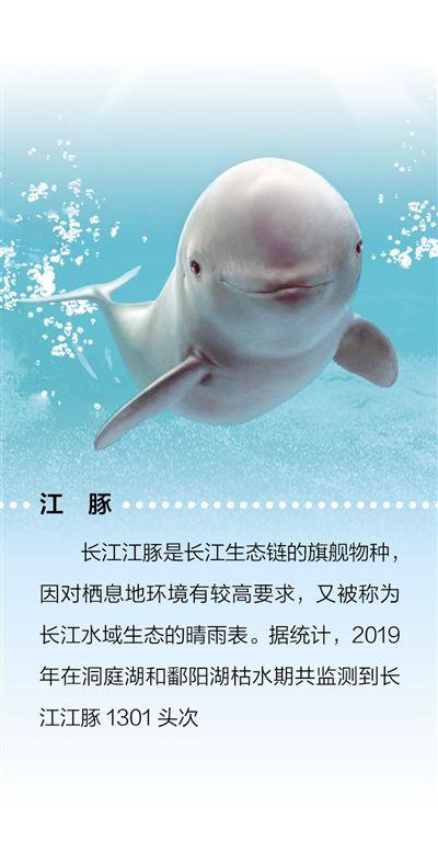 物种保护为长江添活力(大江大河·长江保护这五年④)