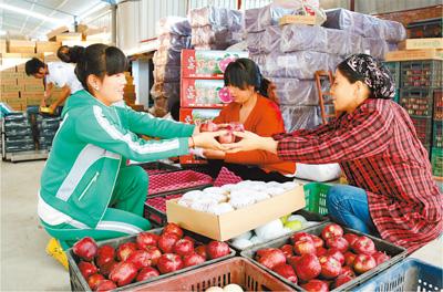 陇南农家小院变身近7000家网店