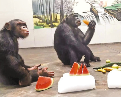 但西安秦岭野生动物园的上万只动物享受着夏日里一份难得的清凉.