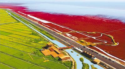 红海滩国家风景廊道生态旅游区.