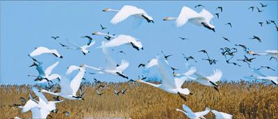 玛纳斯河畔鸟啁啾