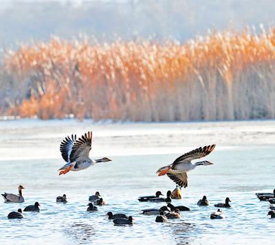 拉鲁湿地鸟儿欢