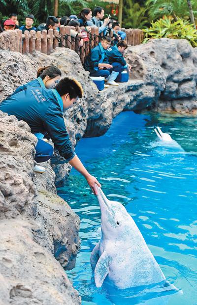 中华白海豚亮相珠海