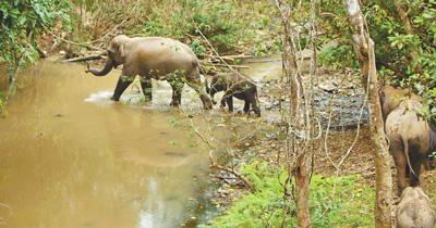 亚洲象的一天