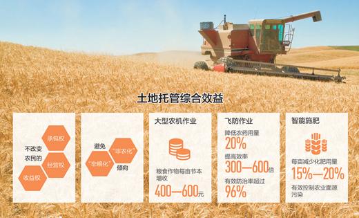 山东产粮大县的土地托管调查:谁来种?怎么种?