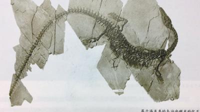 用科普讲述生命演化的史诗 - weicuibai65 - 雕龙绣凤
