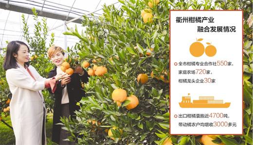 """一颗柑橘转型的""""苦酸甜"""""""