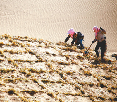 增绿增收  治沙治穷(绿色焦点・广泛开展国土绿化行动④)