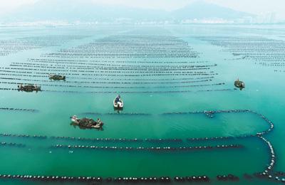 7月4日,山东荣成市石岛管理区石岛湾海域,一家海水养殖企业正在