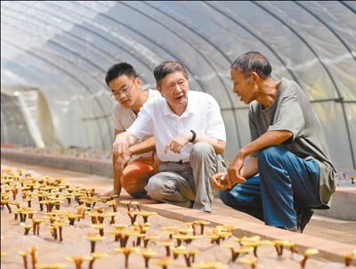安徽:大棚来了技术专家