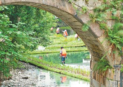 福建福州:提升河水自净能力