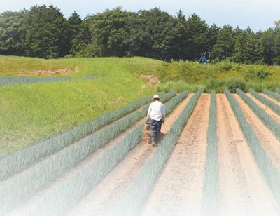 """日本小镇唱活一本""""农业经""""(他山之石)--国际--人民网"""
