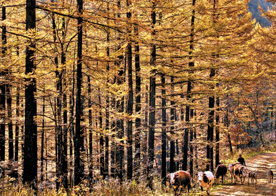 我国人工林规模居世界首位