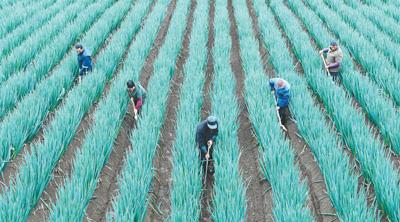 特色农业助民增收