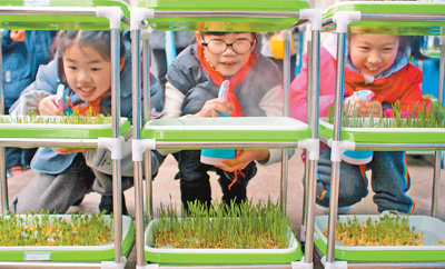 教室裡的小菜園