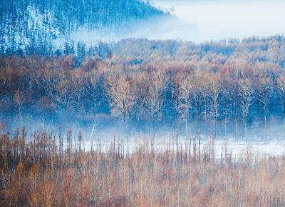 内蒙古大兴安岭林区20年新增林地近140万公顷