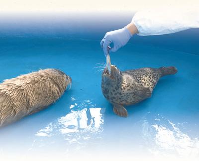 """给斑海豹一个安全的""""家"""""""