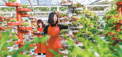 春来耕种忙  乡村产业旺。[阅读]