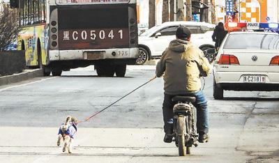 如此遛狗不安全