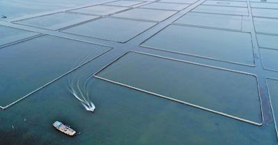以魚抑藻淨化水質