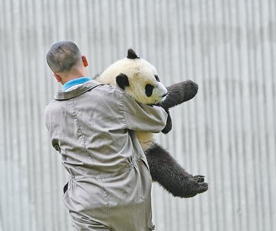 四川發現首只白色大熊貓