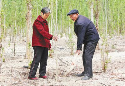 """""""这辈子要种一百万棵树!"""""""