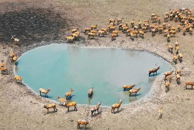 大丰麋鹿保护区麋鹿种群总数已达5016头