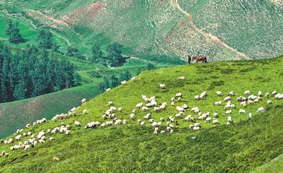 富了牧民绿了草原(礼赞70年)