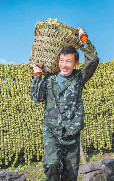 涪陵榨菜協作生產惠三方(經濟發
