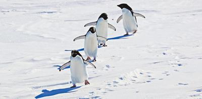 """""""雪龙2""""号极地科考破冰船 探秘南极动物世界"""