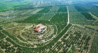 中国大规模国土绿化
