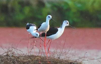 浙江衢江:水岸同绿引鸟栖