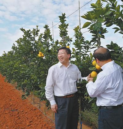 引领赣南脐橙爬坡过坎,给红土地一个产业依靠