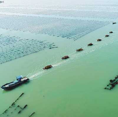 海带进入收获季