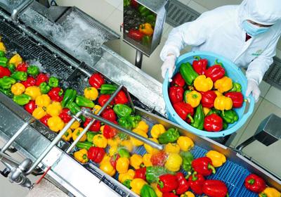 助推垃圾减量 农产品批发市场鼓励净菜入场