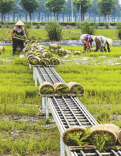 禾苗机器送插秧效率高