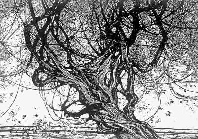 古墙老树(版画)