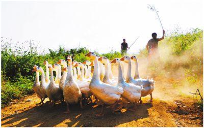 【农家乐】农民玩摄影 有收获有收入