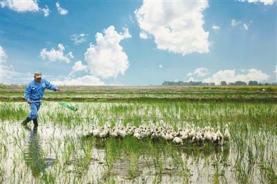 人民日报:【绿色焦点】盐碱滩上种植梦想