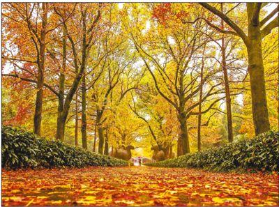 落叶不扫景更美