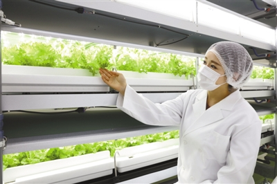 """日本""""植物工厂""""在城市地下种菜"""