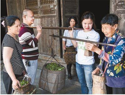 大學生畢業后選擇回鄉創業,成立龍鳳茶葉種植專業合作社